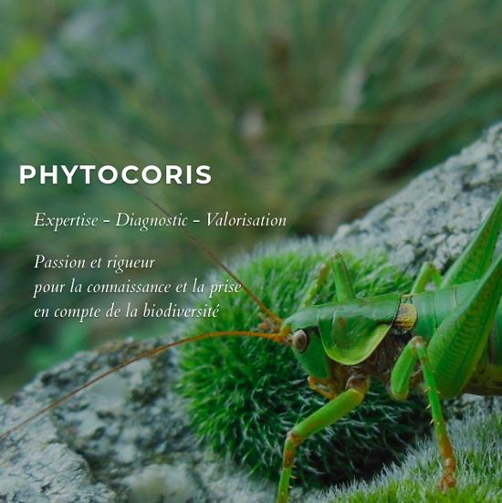 site web naturaliste indépendant Phytocoris, expertise naturaliste