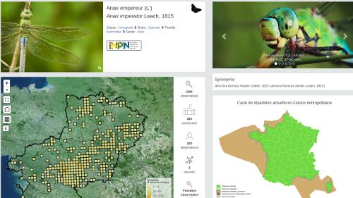 atlas biodiversité Pays de la Loire Une fiche espèce