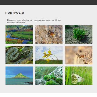 site web naturaliste indépendant Galerie photographique de Phytocoris